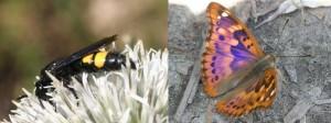 Biodiversität auf Betriebsflächen